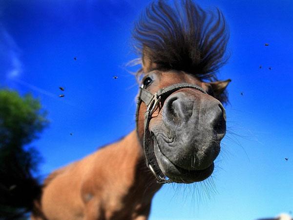 лошадиный шампунь бальзам